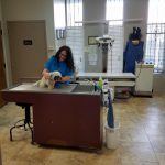 Dog Being Looked at by Vet